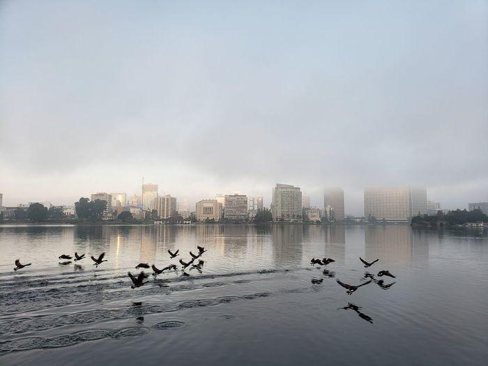 Flock of birds in lake against cityscape