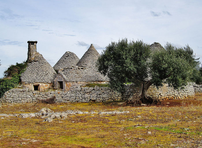 Ancient Trulli, traditional very old houses and olive trees in countryside in Puglia, Italy Ancient Field Holiday Holidays Nature Olive Tree Puglia Roof Abandoned Ancient Architecture Ancient Civilization Architecture Building Exterior Built Structure Countryside History Italy Landscape Nature Old Old Ruin Outdoors Salento Tree Valle D'itria