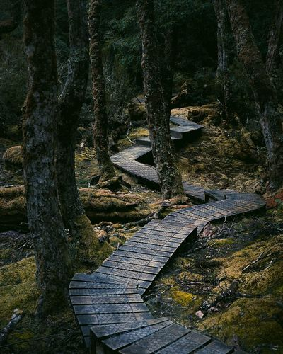 No People Outdoors Day Backgrounds Nature Tree TasmaniaAustralia Tasmanian Landscape Mossy Tree Pathway In The Forest Pathway Full Frame Textured  Green Moody Nature Moody Boardwalk Forestwalk Forest Forest Path Travel Destinations Nature