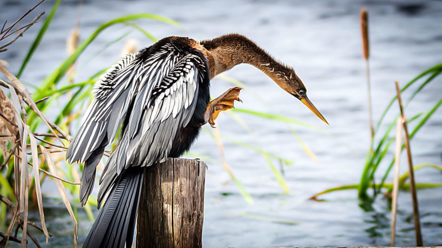 Animal Animal Themes Vertebrate Animal Wildlife Animals In The Wild Bird One Animal Water Focus On Foreground Nature Lake Perching No People Plant Day Wood - Material Beak Side View Close-up Outdoors Wooden Post