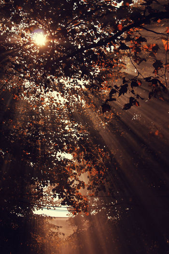 Illuminated trees by road at night