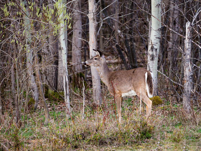 View of deer in forest