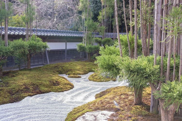 Japanese Garden Architecture Beauty In Nature Bridge Connection Day Flowing Water Forest Green Color Growth Lake Nature No People Ornamental Garden Outdoors Plant Scenics - Nature Tranquil Scene Tranquility Tree Water α900 日本庭園 A New Beginning EyeEmNewHere EyeEmNewHere