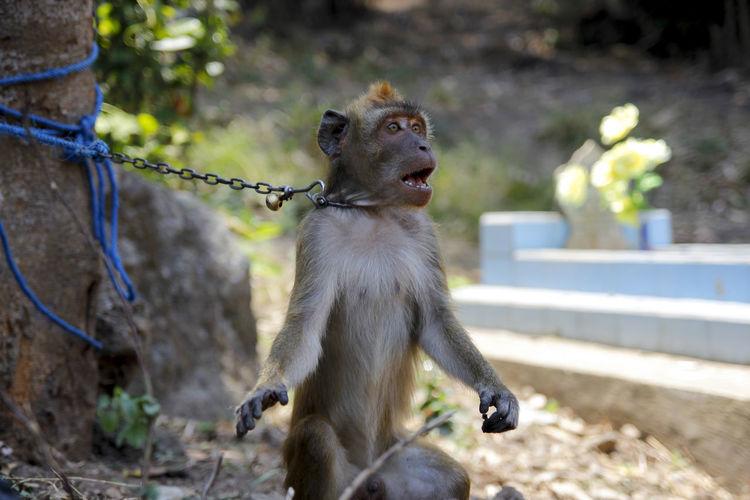 Portrait of a monkey looking away