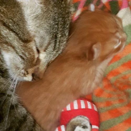 Motherhood... Cats Cat Catlover Ilovemycat Photooftheday Picoftheday Cute Bestoftheday Igers Catoftheday Home Sweet Kitten Kittens Sleepingangel