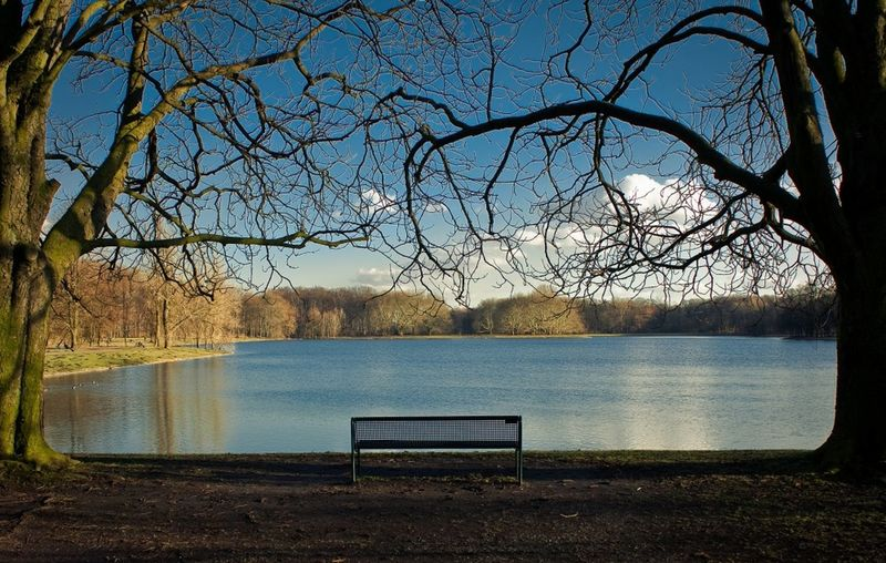 Bare Tree Beauty In Nature Bench Day Nature No People Outdoors Sky Tree Water