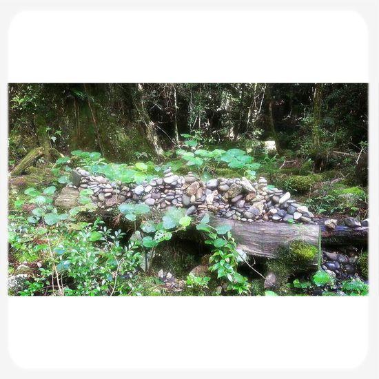 屋久島 (Yakushima Of The World Natural Heritage) Green Stone Fromthetrails