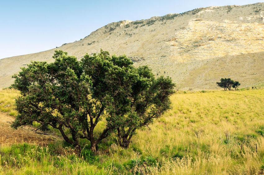 Nikon Nikkor1224 Nikond7200 Colors Amazingplaces Landscape Landscape_Collection Landscape_photography Italia Colors Summer Colorful Tree Sky Grass Landscape Plant Rocky Mountains