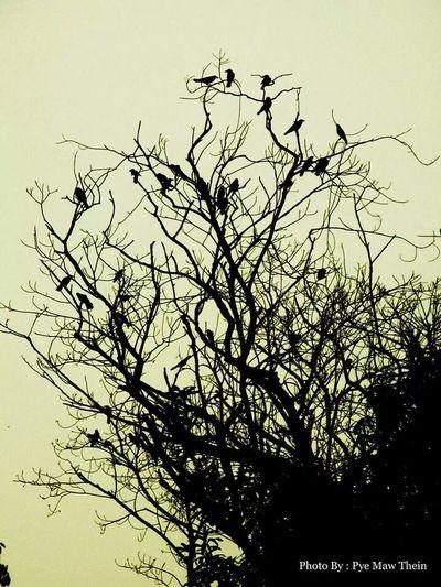 Bird On The Tree Art photo