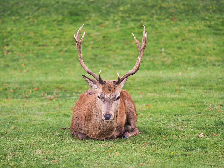 50 Bushy Park Pictures Hd Download Authentic Images On Eyeem