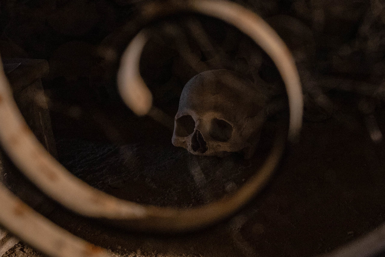 no people, close-up, bone, still life, human skeleton, indoors, selective focus, skull, spooky, high angle view, single object, wood - material, skeleton, social issues, cigarette, history, old