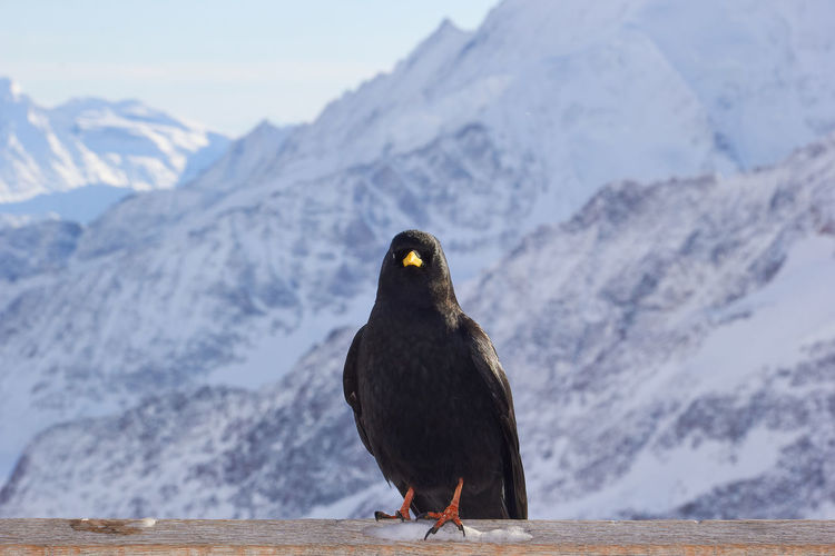 Close-up of bird perching against mountain