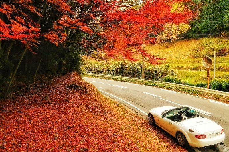 秋 山道 紅葉 もみじ マツダ ロードスター 枯れ葉 木 Tree Road No People Day Outdoors Nature Sky Close-up 落葉 Nature Mazda MX-5 Miata Mx5 Miata 道路 Road Beauty In Nature