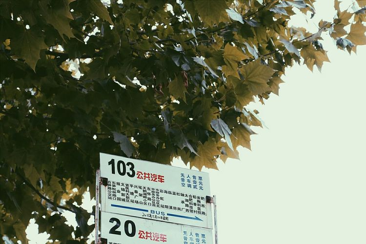 Low angle view of information sign on tree