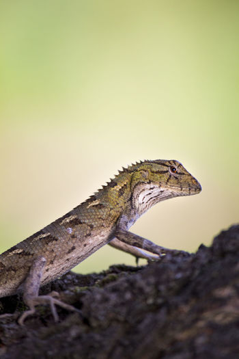 Climbing Lizard Lizard Lizard Nature Nature Nature Photography 👣 Rainy Days☔ Rainy Season Wildlife & Nature Wildlife And Nature Wildlife Photography Wildlifephotography