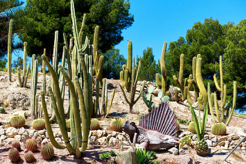 Algar, Spain - April 8, 2017: Realistic model of a Dimetrodon in the Dino Park of Algar. It is a unique entertainment and educational park. Spain Alicante Province Spain Dino DinoPark Dinosaur SPAIN Amusement Park Beauty In Nature Cactus Day Dimetrodon Dino Park Entertainment Park Jurassic Period Nature No People Outdoors Paleontology Plant Scenics Tree Tropical Climate Tropical Plants