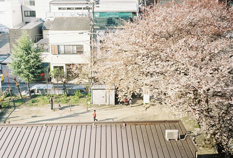 Filmcamera Filmphotography Film Filmphoto 35mm Nikon NEW FM2 Japan Photo EyeEm EyeEm Best Shots Photography EyeEm Gallery Spring Nikon S2 Nikon