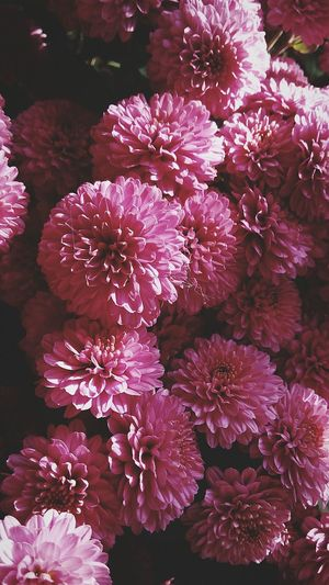 Flowers Pink October Day