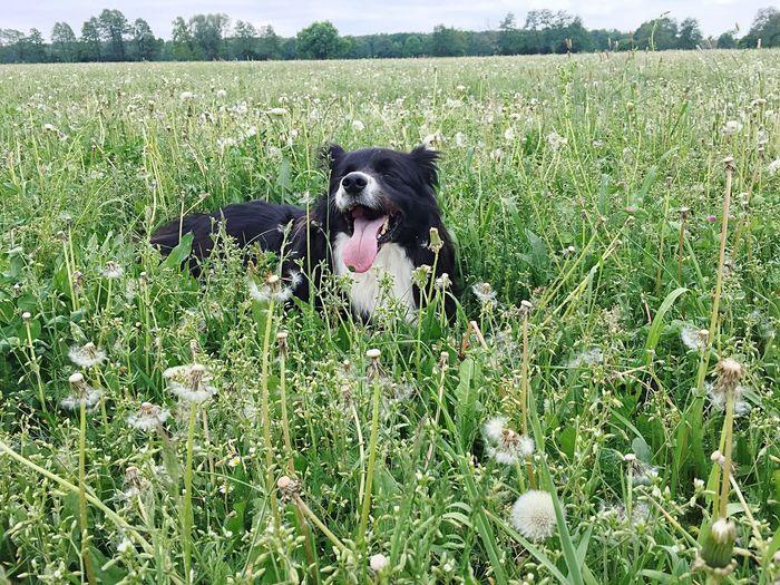 One Animal Canine Domestic Pets Domestic Animals Mammal