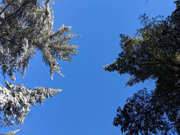 Trees Lookingup