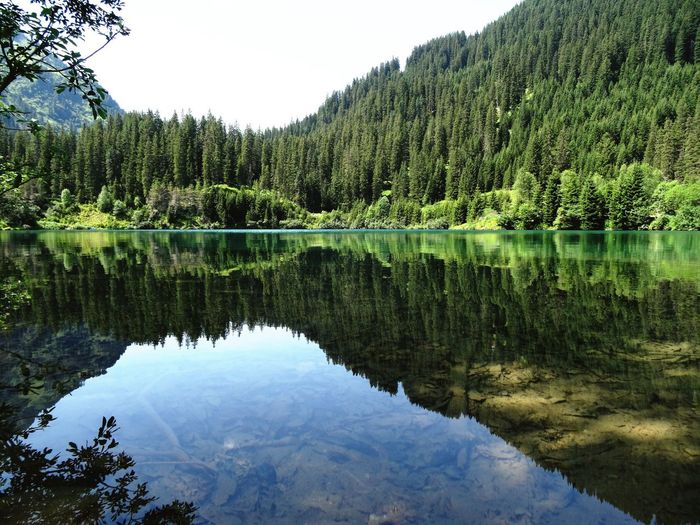 Reflection Nature Tree Water Lake Beauty In Nature Scenics Idyllic Tranquil Scene Outdoors Sky Symmetry Tranquility Forest No People Day Clam Austria Trees Mirror Lake Water Reflections