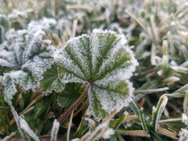 Like your heart. Winter Frost Dofoftheday Close-up Outdoors Dof_addicts Samsung Galaxy S7 Recover EyeEm Best Shots Tadaa Community