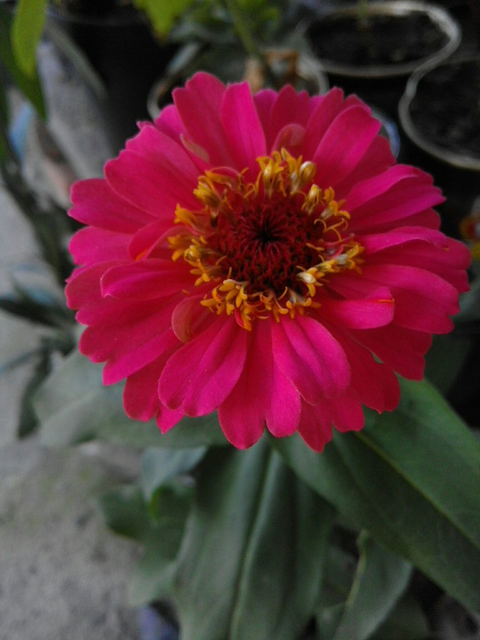 flower, petal, beauty in nature, nature, flower head, fragility, growth, plant, freshness, no people, close-up, blooming, outdoors, day