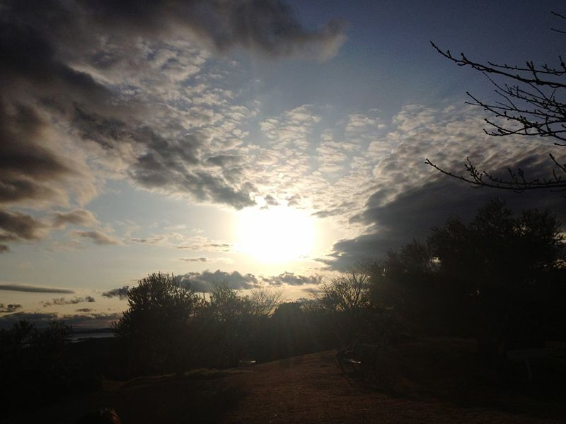 sun Beautiful Beauty In Nature Japan Bench Olive Garden Park Clouds And Sky Cloud - Sky Tree Silhouette Sky Sun Sunbeam Sunset EyeEmNewHere