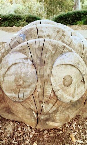 Timber Log Wood - Material Close-up Treen Art Face Wooden Sculpture Urban Art UrbanART Woodcarved Woodcarving Faces Carved In Wood Carved Wood Carved Wooden Figure Carved Wooden Figures Wood WoodArt Wooden Sculpure Woodcarvings Wood Art Street Photography Streetphotography TreenArt