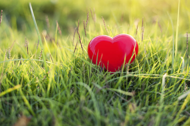 Close-up of red heart shape on grass