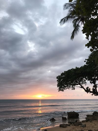 Sea Water Sky Nature Scenics Cloud - Sky Beauty In Nature Beach Horizon Over Water Tranquil Scene Tranquility Sunset No People Tree Idyllic Outdoors Palm Tree Puerto Rico Rincon Peace Peaceful