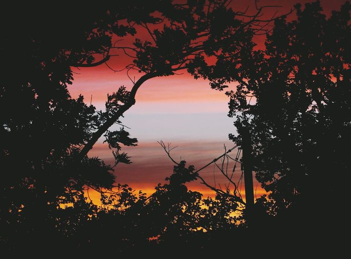 Nature Photography Beauty In Nature Contour Nature Nature_collection Nature_perfection Naturelovers No People Orange Color Outdoors Scenics Silhouette Sky Sunset Tranquil Scene Tranquility Tree