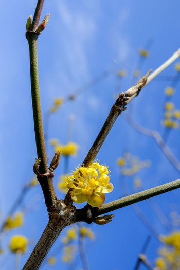 Low angle view of flowering plant on branch