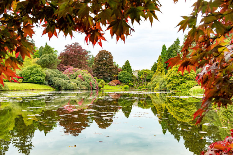 Scenic view of calm lake at sheffield park garden