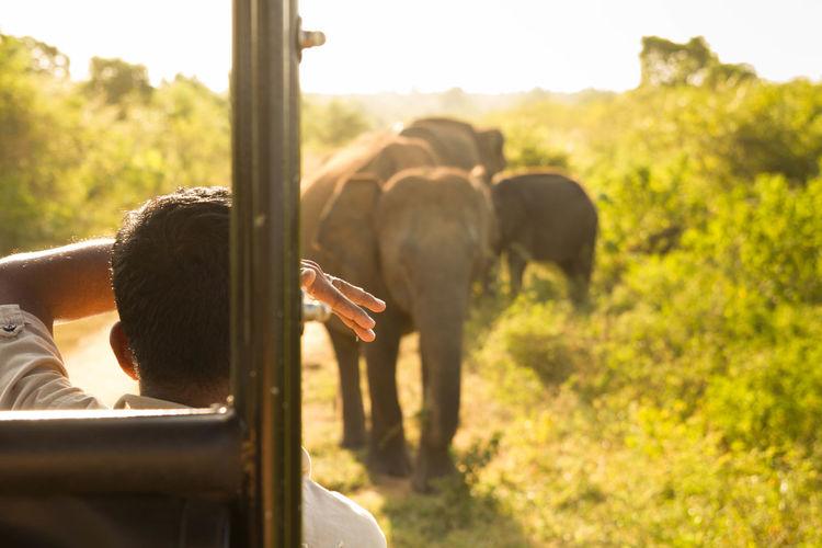 Rear View Of Man Looking Elephants On Field