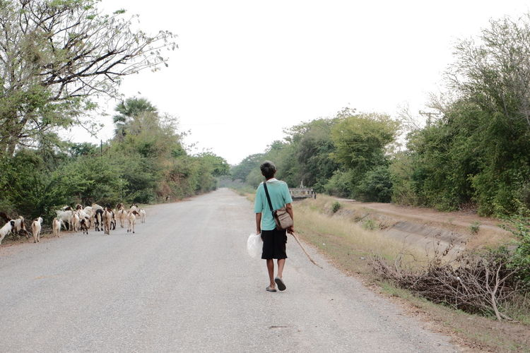 Rear view of man walking on road against trees