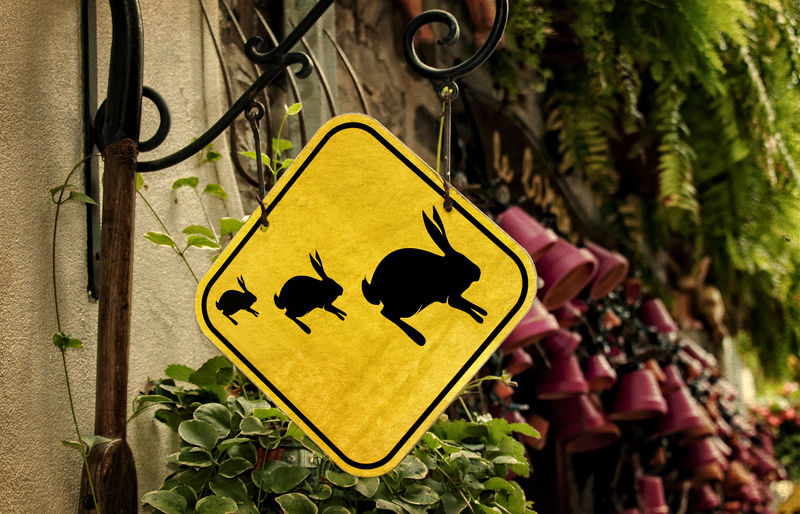 Rabbit crossing sign photographed in Quebec, Canada, shows three different sized rabbit silhouettes. City Scene Easter Quebec Sign Animal Themes Animals Bunny Rabbit Day Funny Sign Rabbit Rabbit Crossing Rabbit Crossing Sign Wildlife