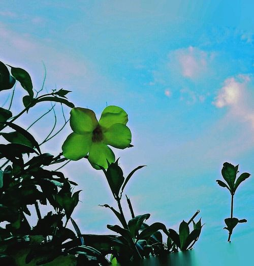 Paz Tranquility Tranquil Scene Tranquilidad Atardecer Photography Bellezza Cielo Reflection Flor Verde Camino Cielo Y Nubes  Naturaleza Leaf Nature Green Color Outdoors Sky Blue Plant Flower No People Low Angle View Day Beauty In Nature Close-up Freshness Tree Growth