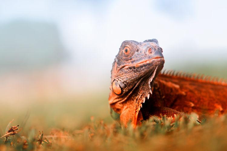 Close-up of iguana on plant