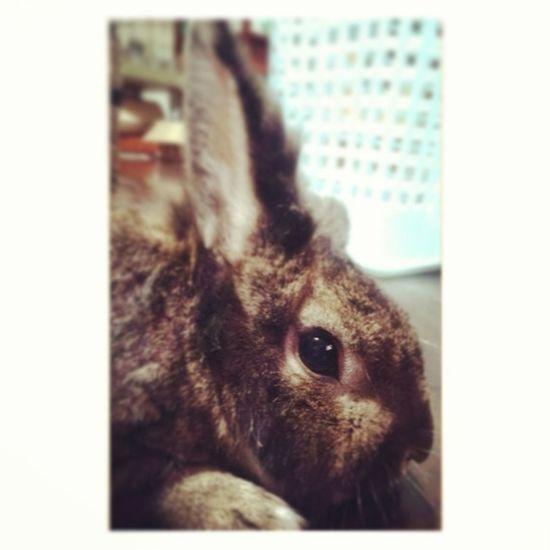 My rabbit ?