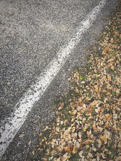On the road. High Angle View Asphalt Winter Road Still Winter Diagonal Asphalt Leaves White Line Keep Moving Outdoors Close-up Visible Border Dead Oak Leafs