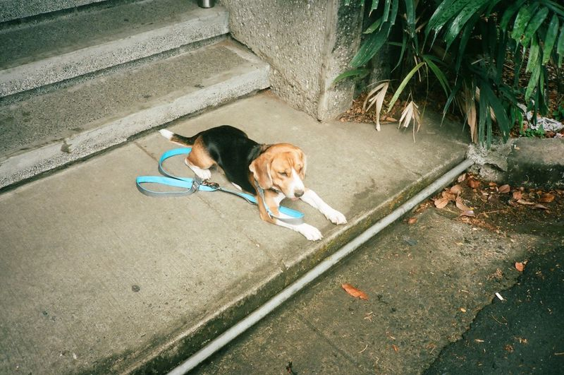 High angle view of dog lying on sidewalk