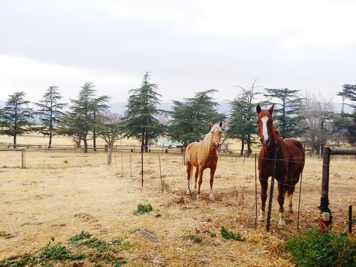 Horses Horse Life Freestate South Africa Peaceful Nature Outdoor Photography Tree Full Length Rural Scene Horse Sky Livestock Paddock Working Animal Animal Pen Pony Horseback Riding Mane Ranch Herbivorous Foal Barbed Wire