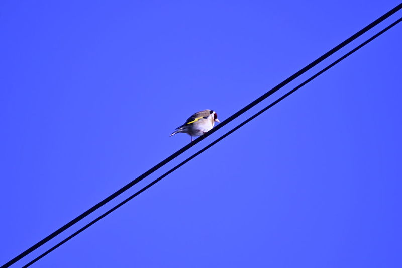 Low angle view of bird perching on cable