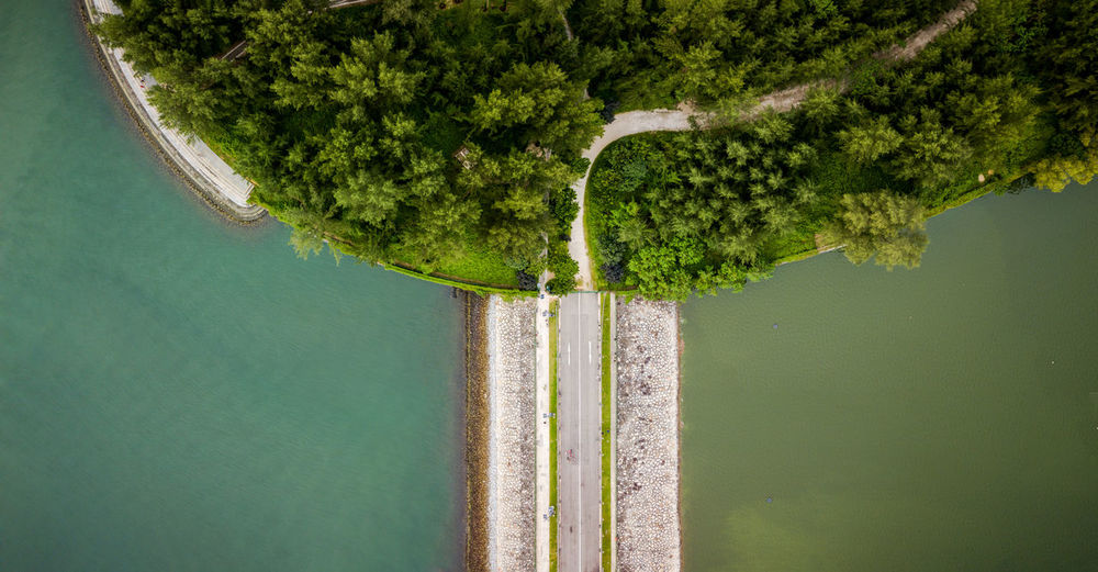 Aerial view of road amidst sea by forest