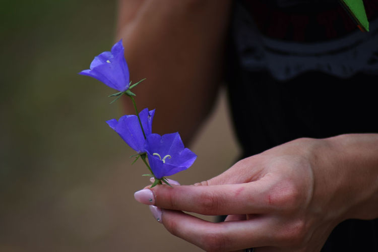 Blue Close-up Day Flower Flower Head Fragility Freshness Growth Holding Human Body Part Human Hand Nature One Person Outdoors People Petal Real People