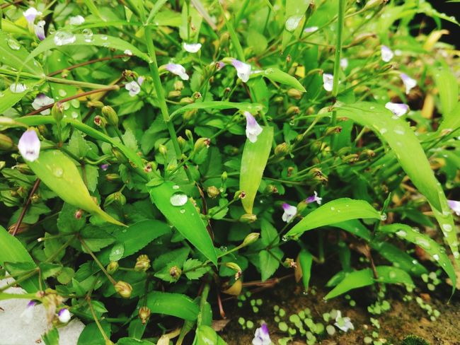 Leaf Growth Plant Close-up Freshness Nature Flower Green Color Lush Foliage Beauty In Nature Fragility Day Green Blossom Tranquility In Bloom Botany Outdoors Springtime Growing