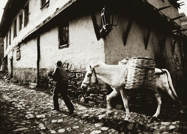Horse and boss ... Photography Turkey Boss Horse Village Köy Life Yaşamdankareler