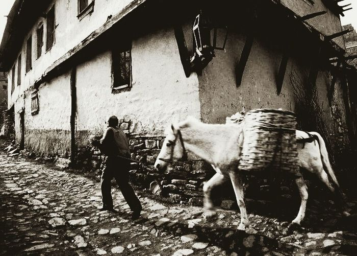 Horse and boss ... Photography Turkey Boss Horse Village Köy Life Yaşamdankareler