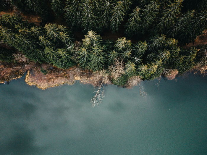 High angle view of tree by lake